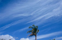 1本の木の上を斜めに流れる雲 02372000350| 写真素材・ストックフォト・画像・イラスト素材|アマナイメージズ