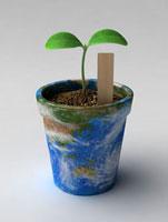 植木鉢から出る双葉 02374000154| 写真素材・ストックフォト・画像・イラスト素材|アマナイメージズ