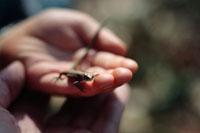 親子の手とトカゲ 八国山緑地