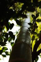 竹と葉 大田黒公園 02376000120| 写真素材・ストックフォト・画像・イラスト素材|アマナイメージズ
