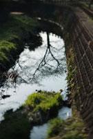 水面に映る枯れ木