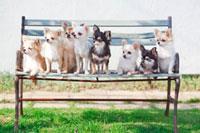 ベンチに並ぶチワワ