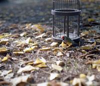 籠から出た小鳥
