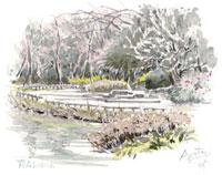 藤崎森林公園の梅 02398000270| 写真素材・ストックフォト・画像・イラスト素材|アマナイメージズ
