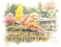 紅葉の本土寺 02398000272| 写真素材・ストックフォト・画像・イラスト素材|アマナイメージズ