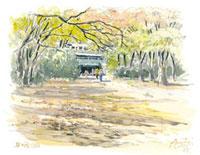 秋の井の頭公園 02398000278| 写真素材・ストックフォト・画像・イラスト素材|アマナイメージズ