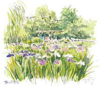 菖蒲の咲く堀切菖蒲園