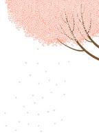満開の桜の木と花びら