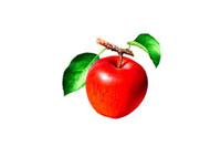 アップル イラスト 02405000001| 写真素材・ストックフォト・画像・イラスト素材|アマナイメージズ