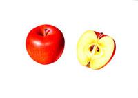 アップル イラスト 02405000002| 写真素材・ストックフォト・画像・イラスト素材|アマナイメージズ