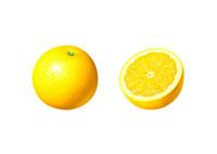 グレープフルーツ イラスト 02405000003| 写真素材・ストックフォト・画像・イラスト素材|アマナイメージズ