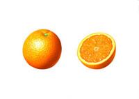 オレンジ イラスト 02405000005| 写真素材・ストックフォト・画像・イラスト素材|アマナイメージズ