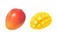 アップルマンゴー イラスト 02405000021| 写真素材・ストックフォト・画像・イラスト素材|アマナイメージズ