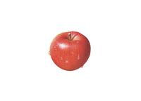 アップル(水滴付き) イラスト 02405000117| 写真素材・ストックフォト・画像・イラスト素材|アマナイメージズ
