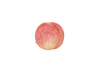 ピーチ(水滴付き) イラスト 02405000123| 写真素材・ストックフォト・画像・イラスト素材|アマナイメージズ