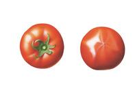 トマト イラスト 02405000126| 写真素材・ストックフォト・画像・イラスト素材|アマナイメージズ