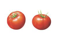トマト イラスト 02405000127| 写真素材・ストックフォト・画像・イラスト素材|アマナイメージズ