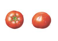 トマト(水滴付き) イラスト
