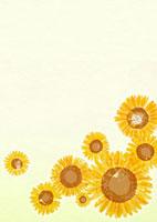 向日葵 02408000012| 写真素材・ストックフォト・画像・イラスト素材|アマナイメージズ