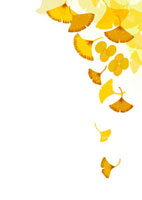 舞い落ちる銀杏の葉