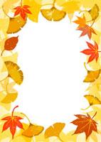 銀杏と紅葉のフレーム 02408000016| 写真素材・ストックフォト・画像・イラスト素材|アマナイメージズ