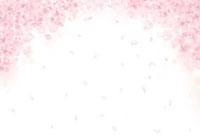 満開の桜の花と花びら