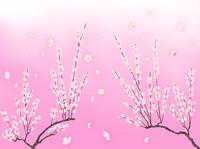 満開の梅花