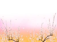白梅 02411000012| 写真素材・ストックフォト・画像・イラスト素材|アマナイメージズ
