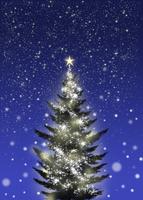 シンプルなクリスマスツリー 02411000015| 写真素材・ストックフォト・画像・イラスト素材|アマナイメージズ