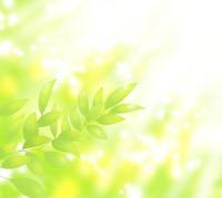 新緑の若葉に木漏れ日が差す 02411000034| 写真素材・ストックフォト・画像・イラスト素材|アマナイメージズ