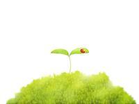 森に芽吹いた双葉とテントウムシ 白バック 02411000041| 写真素材・ストックフォト・画像・イラスト素材|アマナイメージズ