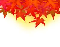 紅葉したモミジの落葉-背景色付 02411000047| 写真素材・ストックフォト・画像・イラスト素材|アマナイメージズ