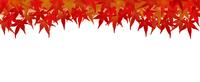 紅葉したモミジ 背景色付き
