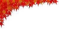 紅葉したモミジ 角のデザイン用 背景色付き