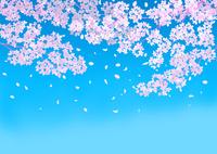 青空と桜 02411000059| 写真素材・ストックフォト・画像・イラスト素材|アマナイメージズ