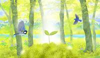 芽吹いたブナの森と湖に、本葉を出したブナの幼樹と小鳥