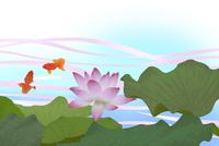 睡蓮と金魚 02411000074| 写真素材・ストックフォト・画像・イラスト素材|アマナイメージズ