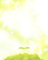 森に芽吹いた双葉 02411000092| 写真素材・ストックフォト・画像・イラスト素材|アマナイメージズ