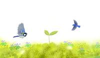芽吹いたブナと小鳥 02411000093| 写真素材・ストックフォト・画像・イラスト素材|アマナイメージズ