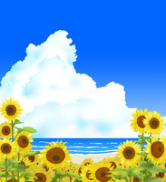 ヒマワリ畑と入道雲と海