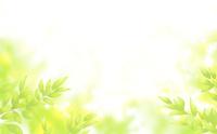 新緑の若葉に包まれる