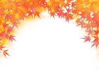 紅葉したモミジの葉