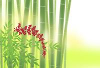 ナンテンと竹林