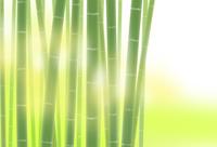 竹林 02411000115| 写真素材・ストックフォト・画像・イラスト素材|アマナイメージズ