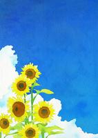 ヒマワリ : 水彩画風