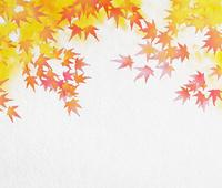 モミジ : 水彩画風 02411000123| 写真素材・ストックフォト・画像・イラスト素材|アマナイメージズ
