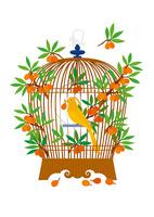 静物_鳥かごとカナリヤ 02412000028| 写真素材・ストックフォト・画像・イラスト素材|アマナイメージズ