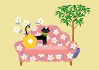 花柄のソファと黒猫 02412000296| 写真素材・ストックフォト・画像・イラスト素材|アマナイメージズ