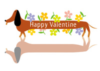 ダックスフンドとバレンタイン 02412000311| 写真素材・ストックフォト・画像・イラスト素材|アマナイメージズ
