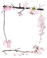 桜のフレーム 02413000001| 写真素材・ストックフォト・画像・イラスト素材|アマナイメージズ